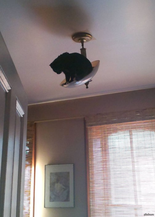 13-cats-that-instantly-regret