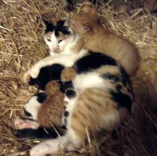 2-cat-mom-adopts-kitten