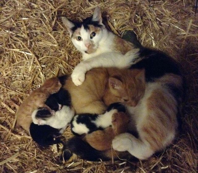 3-cat-mom-adopts-kitten