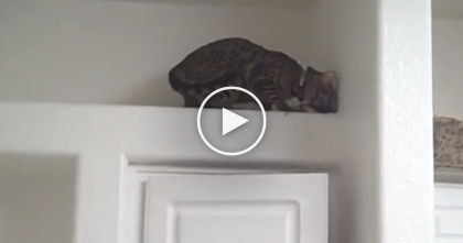 You'll Never Believe What This Bengal Cat Does To Get His Toy…I Can't Believe It!!