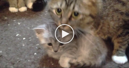 Cat Mom Protects Her Precious Little Baby, But Watch What She Does… Awwww!!
