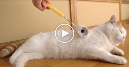 Human Comes Up With Genius Way To Clean The Cat…And It's Pretty Darn Cute!!
