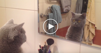 Kitty Discovers The Mirror, But Wait Till You See His Facial Expression… HILARIOUS.