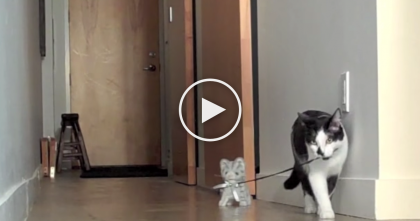 Cat Notices A New Toy, But Just Watch What He Does Next… SOO Cute!!