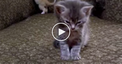 This Kitten Is Trying To Sleep, But It's Nearly IMPOSSIBLE… Just Watch.