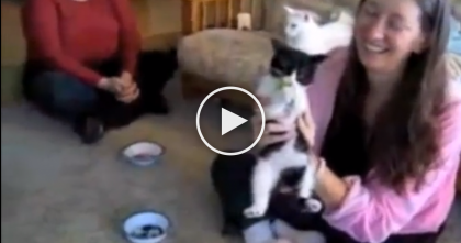 Little Kitten Obsessed With The Most Unlikely Food EVER… I'm Can't Believe My Eyes!!