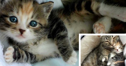 Stray Cat Mom Brings Home The Cutest Little Surprise Ever…And It's Just Heartwarming!