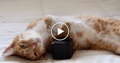 Scientists Have Come Up With Something Amazing For Cats…And They're Gonna love It!