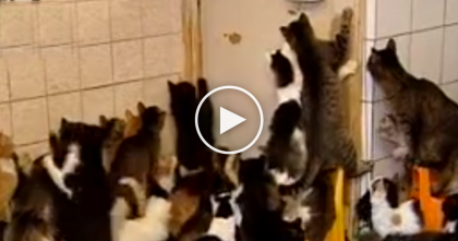 She Rescued Over 136 Abandoned And Stray Cats…But All In Her 3-Room Apartment, OMG!!