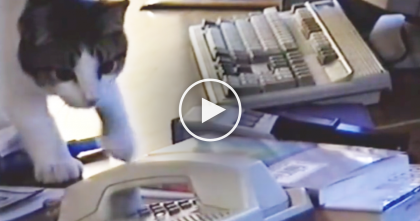 She Was Wondering Why The Phone Was Always Off The Hook, Then She Discovered THIS…