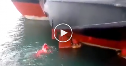 They Noticed A Stray Kitten Stuck On A Cargo Ship…What They Did Next Will Warm Your Heart!