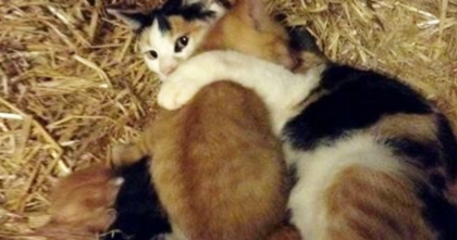 This Big Kitten Was Abandoned By His Mom, But Then He Found His 'Real' Mom…