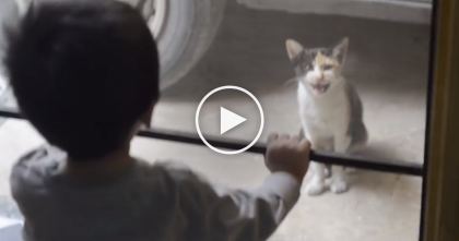 "Toddler Is Talking ""Meow"" Language, But Kitty Has The Purrfect Response… WATCH."