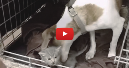 When This Dog Finds Three Abandoned Kittens, Just WATCH What Happens…