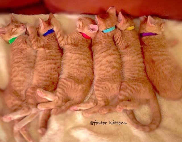 7_Kittens_Lined_Up