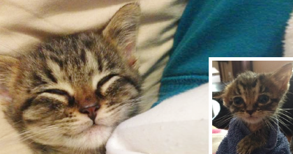 Kitten Was Abandoned On The Street, But When A Kind Human Noticed… Just Wonderful!