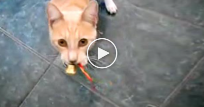 Animals Singing Jingle Bells Is The Best Thing Ever… You've Gotta See It, Just WATCH.