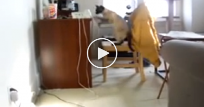 She Dialed Her Own Phone To See What Her Cat Does, But Won't Believe It… Hilarious!!