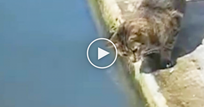 Cat Notices Something Swimming In The Water, But Moments Later…Just Keep Watching.