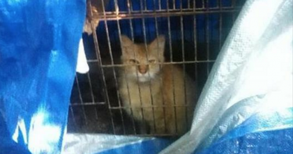 Horrid Person Trapped Kitty Inside A Bird Cage, And Left Her To Die, But Thankfully It Didn't End Here…