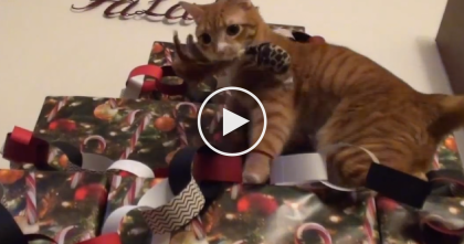 Genius Cat-Proof Christmas Tree Is Your Solution To Every Cat Owners Nightmare!