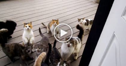He Opens The Door, But THIS Is What Happens…And It Happens Every Morning!!