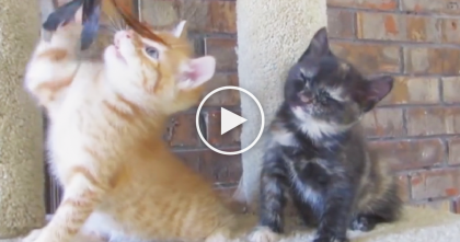 He's Watching His Brother Play With A Toy, But All Of A Sudden…He Just Can't Help It!!