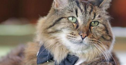 He's 124 Years Old In Kitty Years And The Oldest Cat Alive…WATCH His Story, Amazing!!