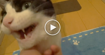 When This Kitty Hears His Owner Come Home, He's Got The Sweetest Reaction I've Ever Heard…