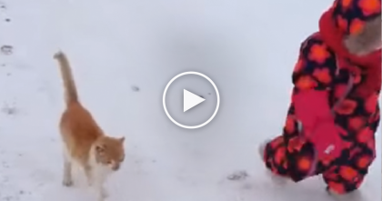 Kitty Is Following His Little Human In The Snow, But Then All Of A Sudden… Whoops!!