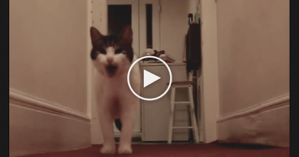 Kitty Notices Secret Camera And Has Something To Say…Just Wait Till You Hear It, Oh My!!