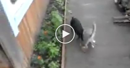 She's Having Problems Getting Her Cat To Come Inside, But You've Gotta See What Happens Next…