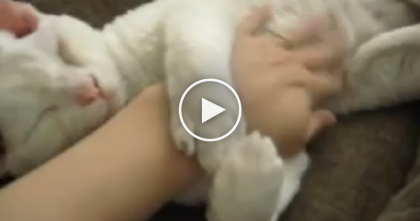 Sleepy Kitty Just Can't Help But Give Owner A Hug In The Cutest Way EVER… Oh My Heart!!
