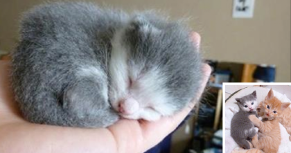 They Found This Newborn Kitten With No Mother, But Now? It's SOO Sweet!!