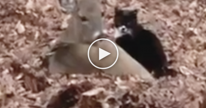 They Saw Their Cat In The Leaf Pile With A New Friend, So They Started Recording…