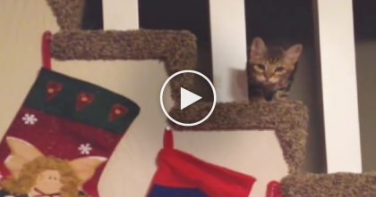 This Little Kitten-Thief Steals The Stockings Before Christmas… Just WATCH.