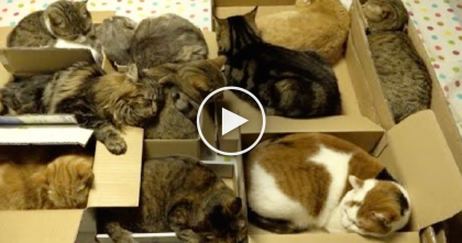 They Invited 10 Cats To A Cardboard Slumber Party, Now Watch What Happens. SOO Cute!!