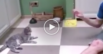 He Throws A Ball At The Cat, But Watch What The Cat Does Next… Are You Kidding Me??