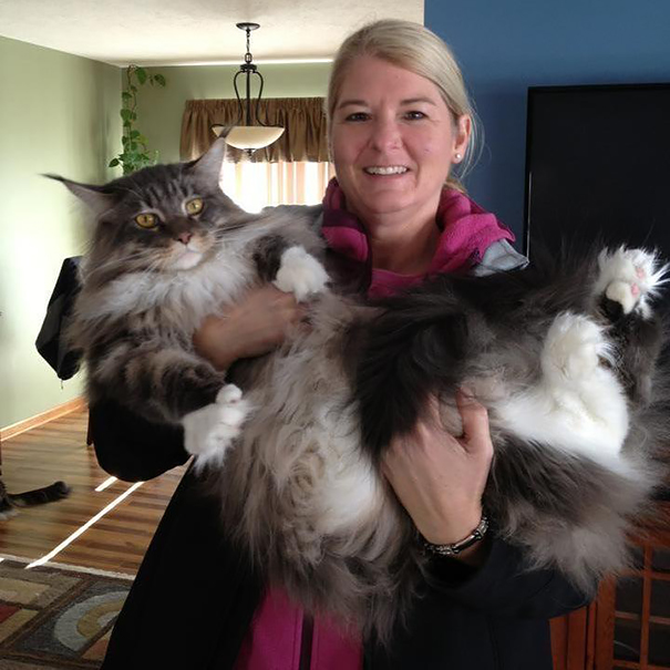 13_Maine_Coon_Cat_and_Owner