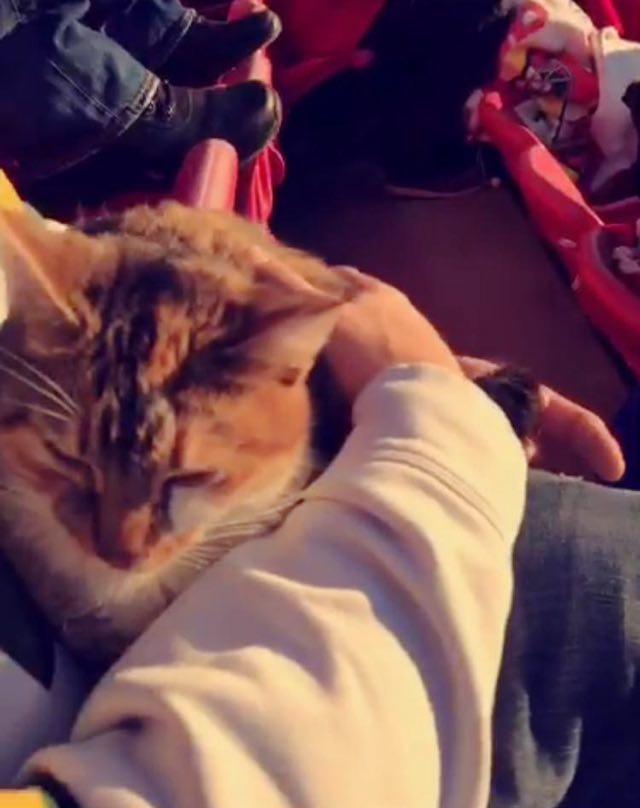 4-cat-rescued-at-nfl-game