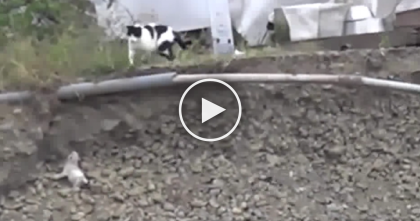 This Kitten Fell Off A Hillside And Was Trapped, But What Does Mom Do Next? AMAZING…
