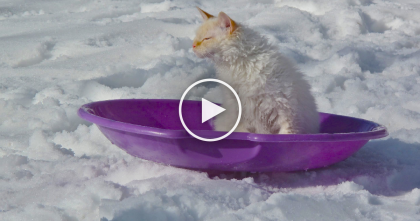 Cat Has Time Of His Life In The Snow, But You Won't Know What To Say When You See… OMG!