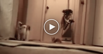 Curious Kittens Flip The WRONG Switch…Then Gets The Surprise Of A Lifetime, LOL!!