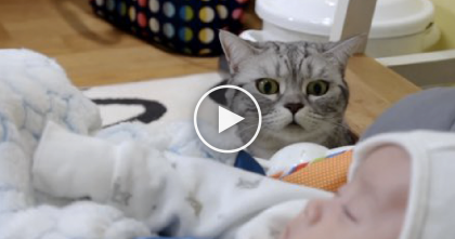 Five Adorable Scottish Fold Cats Discover New Little Human For The First Time… Awww!!