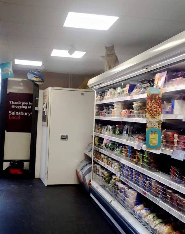 fluffy-supermarket-kitty-1