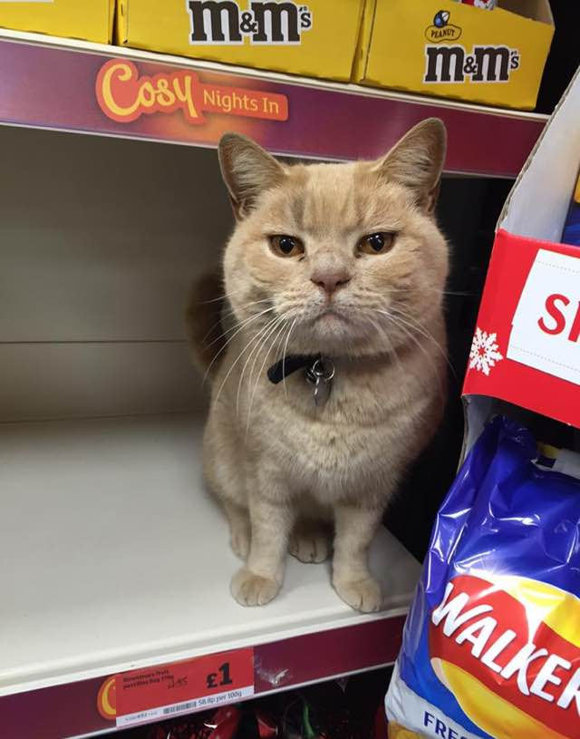 fluffy-supermarket-kitty-4