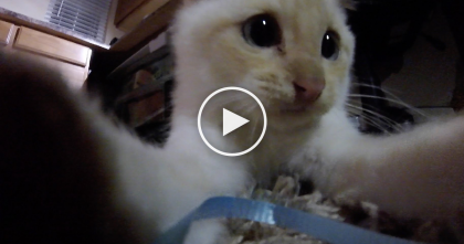 Frozen Kitten Was Rescued, But Now?? Kitty Won't Stop Following Him, TOO Cute… Watch!