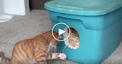 How-To Video: Learn The Genius Way This Man Keeps Stray Cats Warm When It's Cold Outside…