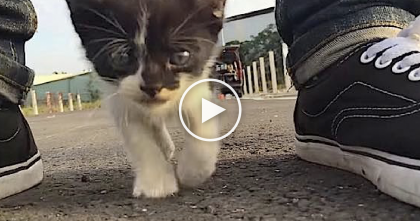 He Was Filming For A Movie, But When This Kitten Started Following, He Started Recording…