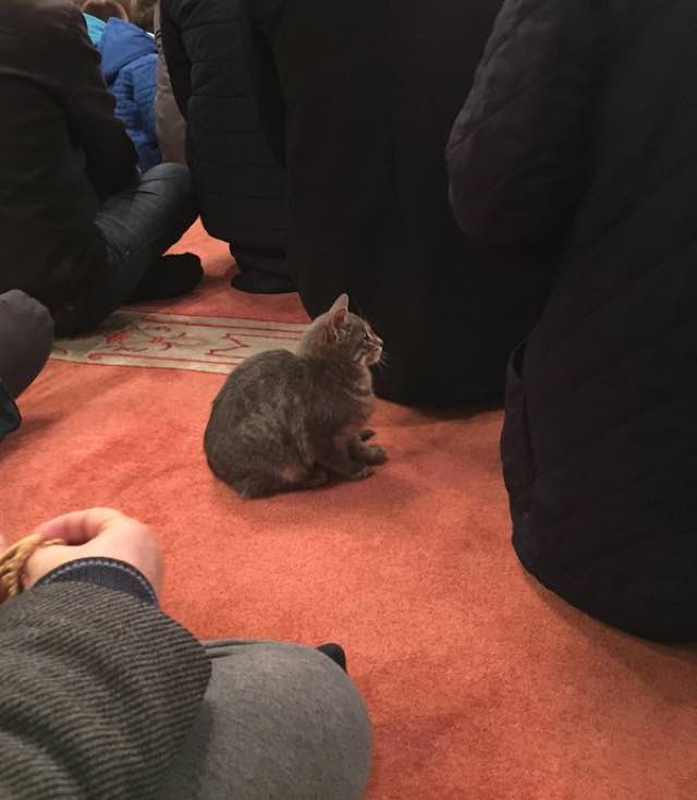 kind-mosque-opens-doors-to-stray-cats